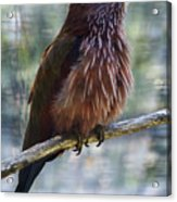 Perched - 1 Acrylic Print