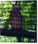 Perched - 4 Acrylic Print