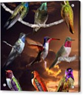 Perched Hummingbird Collage Acrylic Print