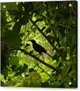 Perched In Green  Acrylic Print