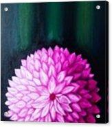 Perennial Acrylic Print