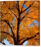 Perfect Autumn Day With Blue Skies Acrylic Print