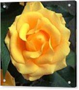 Perfect Bloom Acrylic Print
