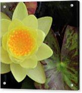 Perfect Flower Acrylic Print