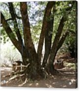 Perfect Picnic Tree Acrylic Print
