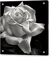 Perfect Rose In Black And White Acrylic Print