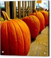Perfect Row Of Pumpkins Acrylic Print