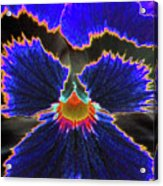 Perfectly Pansy 02 - Photopower Acrylic Print