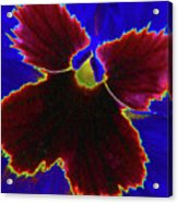 Perfectly Pansy 05 - Photopower Acrylic Print