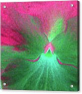 Perfectly Pansy 07 - Photopower Acrylic Print