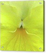 Perfectly Pansy 08 Acrylic Print