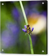 Perfectly Positioned Acrylic Print by Rebecca Cozart