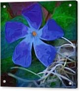 Periwinkle Blue Acrylic Print