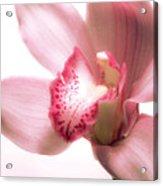 Perky Orchid Acrylic Print