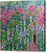 Perky Pink Phlox In A Dahlonega Garden Acrylic Print
