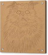 Persian Cat 1 Acrylic Print