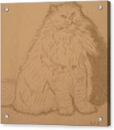 Persian Cat 3 Acrylic Print