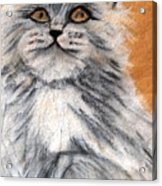 Persian Cat Acrylic Print