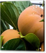 Persimmons Ready For Harvest Acrylic Print