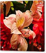 Peruvian Lily Grain Acrylic Print