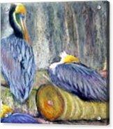 Peruvian Pelicans Three Pastel Acrylic Print