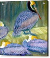 Peruvian Pelicans Two Pastel Acrylic Print