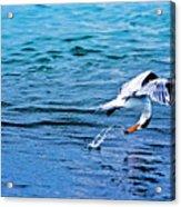 Pescando Vida Acrylic Print