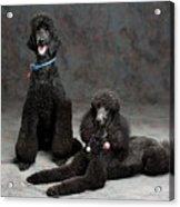 Pet Partners #346 Acrylic Print