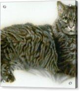 Pet Portrait - Buddy Acrylic Print