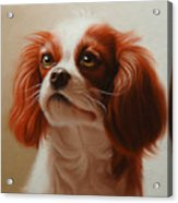 Pet Portrait Of A Cavalier King Charles Spaniel Acrylic Print