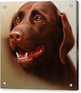Pet Portrait Of A Chocolate Labrador Acrylic Print