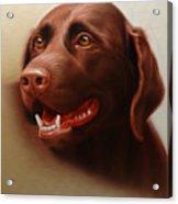 Pet Portrait of a Chocolate Labrador Acrylic Print