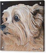 Pet Portrait Painting Commission Cairn Terrier Acrylic Print