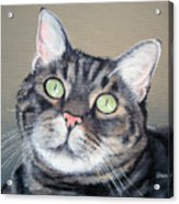 Pet Portrait Painting Commission Tiger Cat Acrylic Print