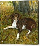 Pet Portrait - Springer Spaniel, Milly Acrylic Print