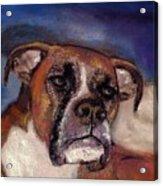 Pet Portraits Acrylic Print