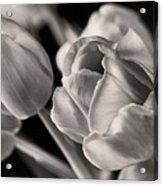 Petal Essence Acrylic Print