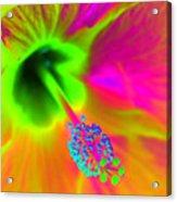 Petal Power - Hibiscus - Photopower 3260 Acrylic Print