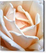 Petal Power Acrylic Print