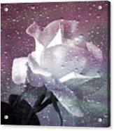 Petals And Drops Acrylic Print