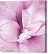 Petals In Pink Acrylic Print
