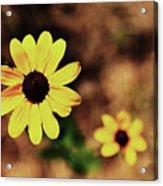 Petals Stretched Acrylic Print