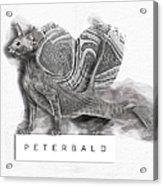 Peterbald Kitten 01 Acrylic Print