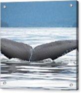 Petersburg Ak Whale Tale 2 Acrylic Print
