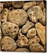 Petoskey Stones Vlll Acrylic Print