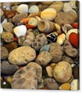 Petoskey Stones With Shells Ll Acrylic Print