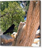 Petrified Raven At Grand Canyon Acrylic Print