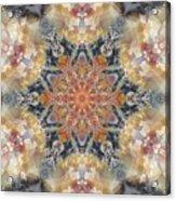 Petrified Snowflake Acrylic Print