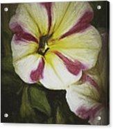 Petunia Sketch Acrylic Print