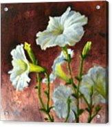 Petunias Delight Acrylic Print